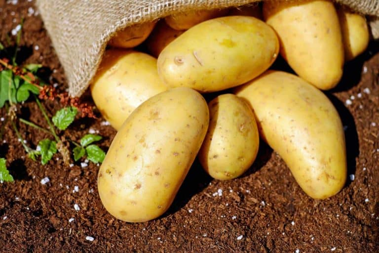 The effect of Manvert Silikon on the yield and skinset of potatoes.